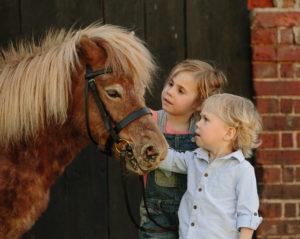Equine photography Hampshire
