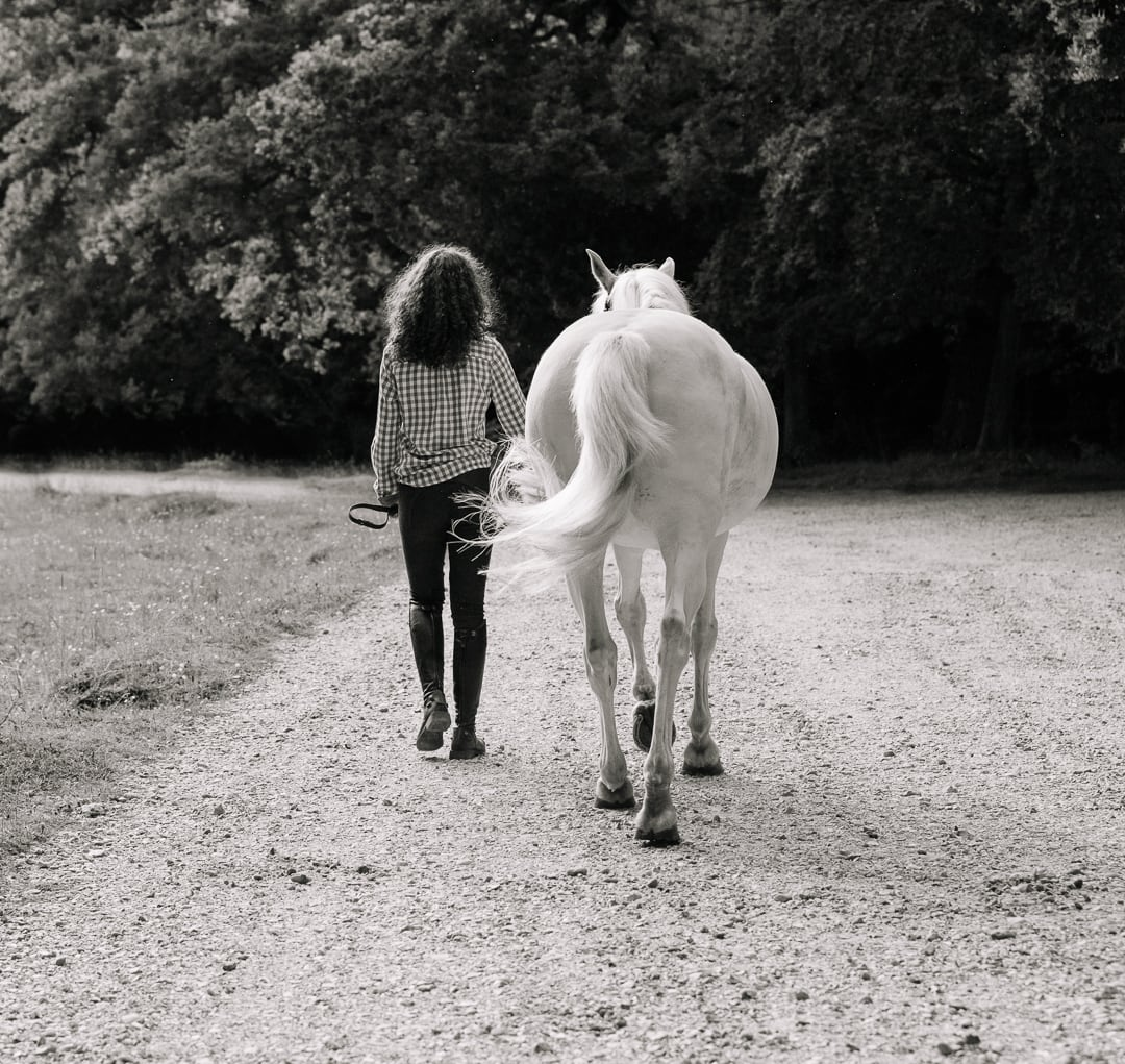 Hampshire equine photography