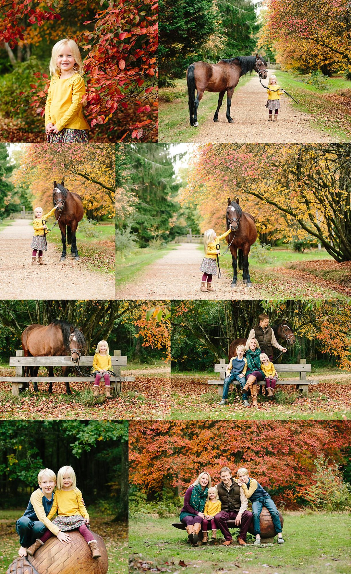 New Forest equine photography Hampshire photographer