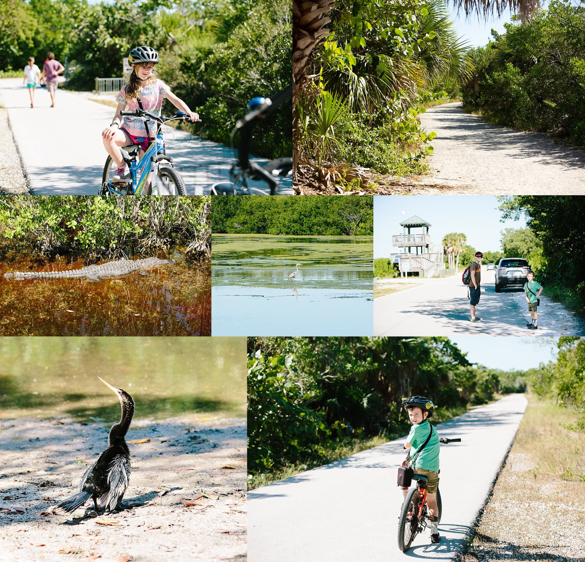 Ding Darling Wildlife Refuge Sanibel Island Florida