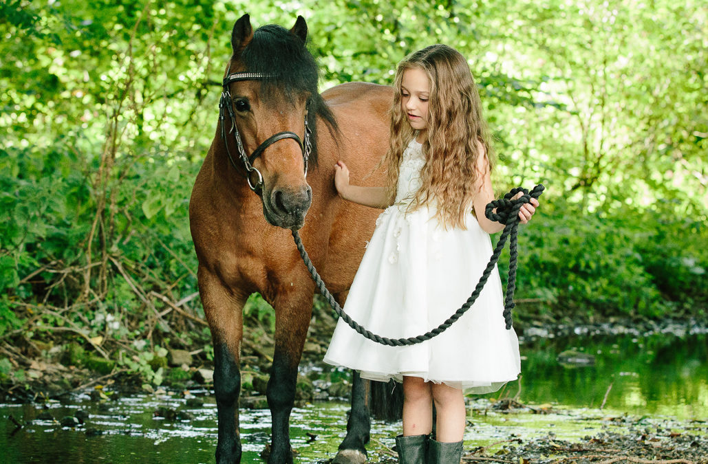Horse photographer | Fordingbridge, Hampshire
