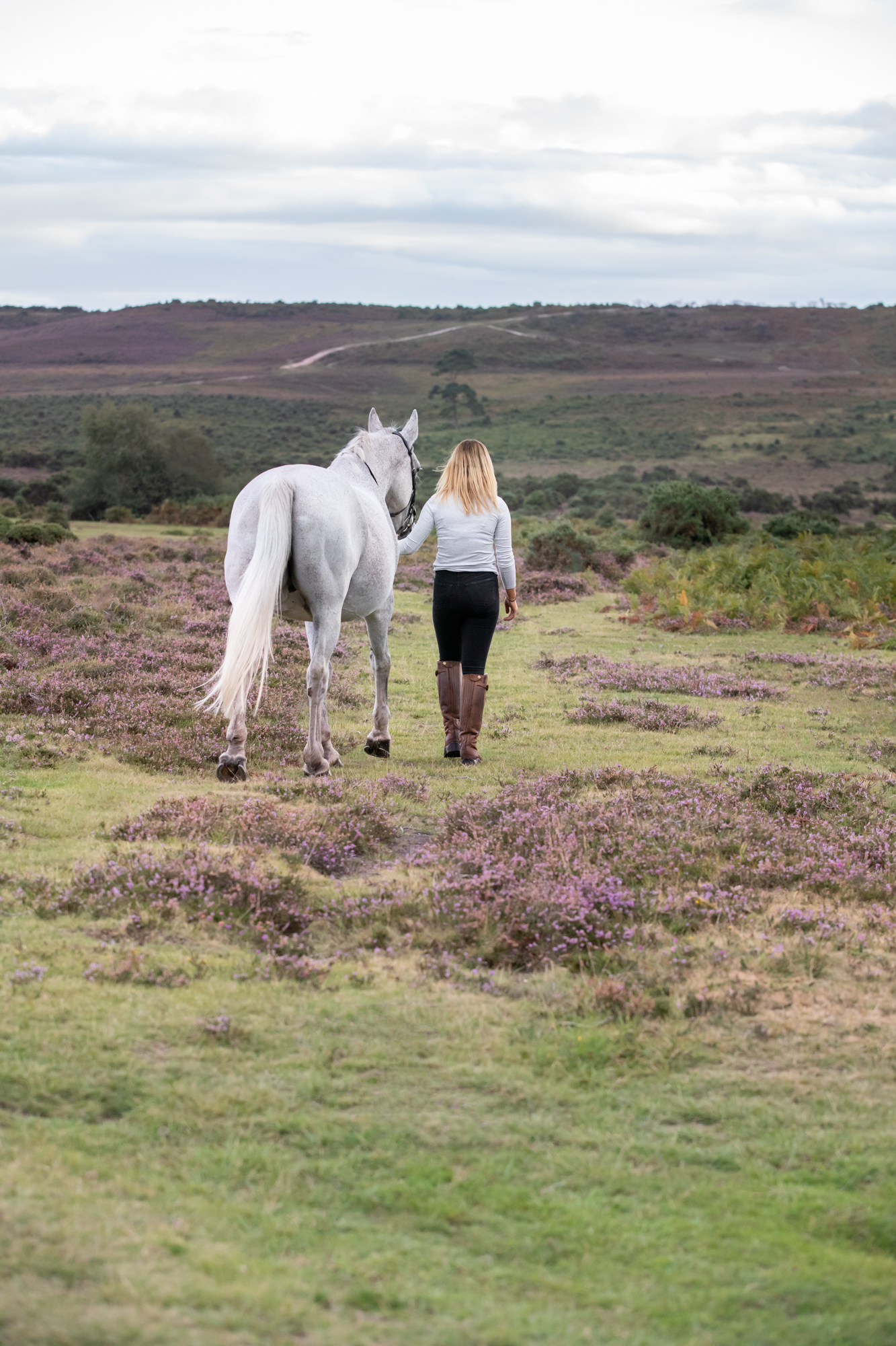 horse walk new forest