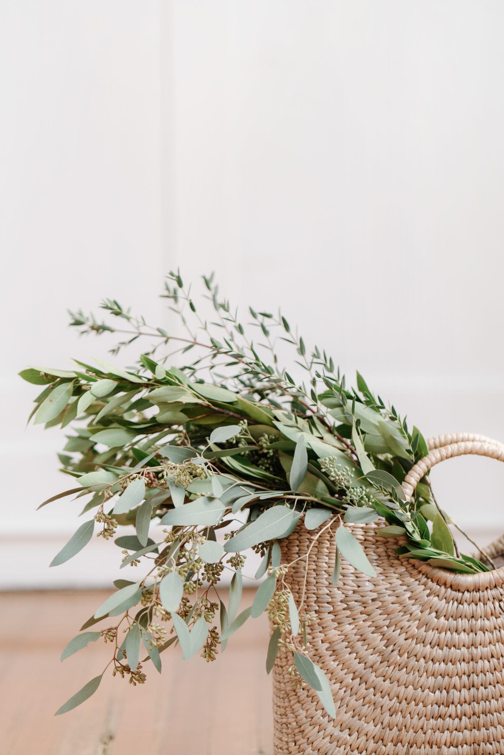 haute stock image plants